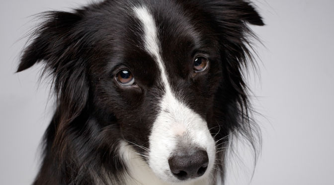 Dogs show more facial expressions when someone looks at the them